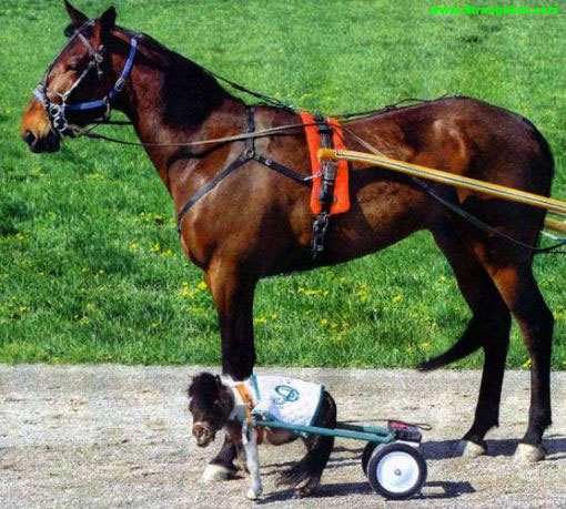 chevaux-de-course[1].jpg
