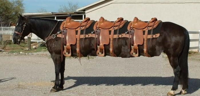grand-cheval[1].jpg