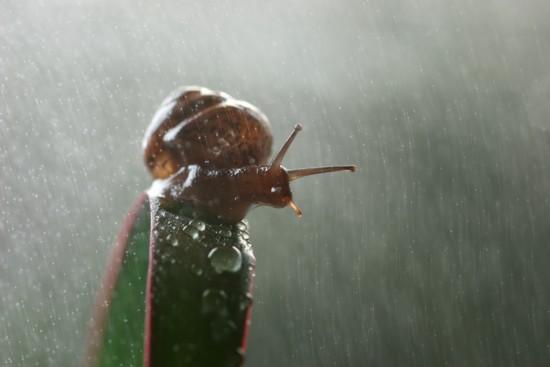 l'escargot et son amie ,la pluie.jpg