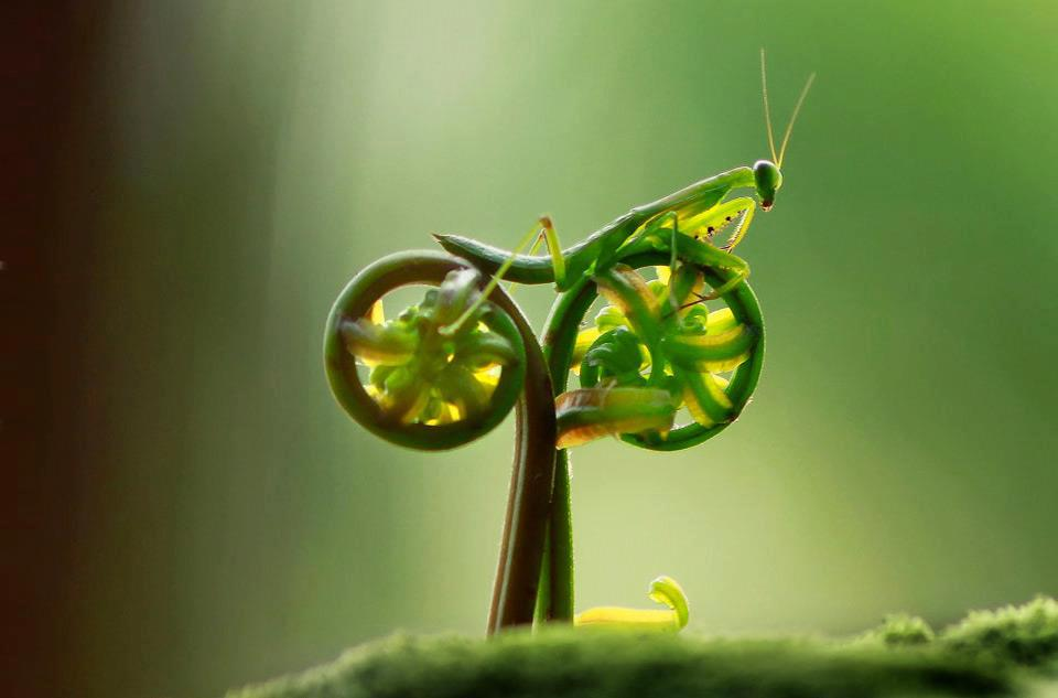 Mantis on natural bike.jpg