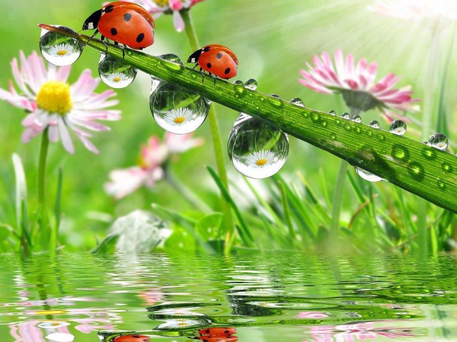 Good Luck ladybugs.jpg