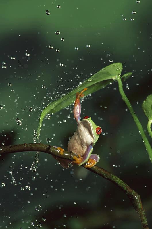 Un nouveau parapluie.jpg