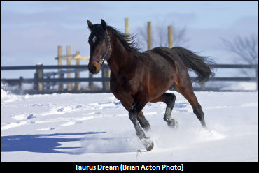 Taurus-Dream-0001.jpg